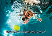 REALISTIC ANIMALS, REALISTISCHE TIERE, ANIMALES REALISTICOS, dogs, paintings+++++SethC_Stella_320B2663rev,USLGSC65,#A#, EVERYDAY ,underwater dogs,photos,fotos ,Seth