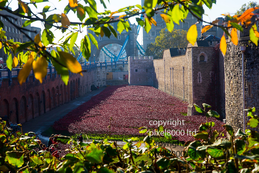 Pic shows: Huge crowds again today at the Blood Swept Lands and Seas of Red<br /> Poppy installation at the Tower of London with just days to  go before it is due to be removed.<br /> <br /> <br /> <br /> <br /> Pic by Gavin Rodgers/Pixel 8000 Ltd