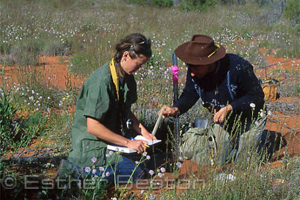 Zoologists recording data from animals caught in pit traps. Simpson Desert, Queensland