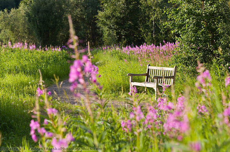 Park bench along a trail at Creamer's field migratory waterfowl refuge, Fairbanks, Alaska