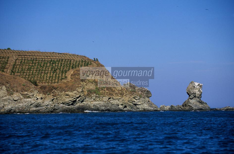 EEurope/France/Languedoc-Roussillon/66/Pyrénées -Orientales/Port-Vendres:Falaises prés du Cap Béar et  le vignoble de Banyuls