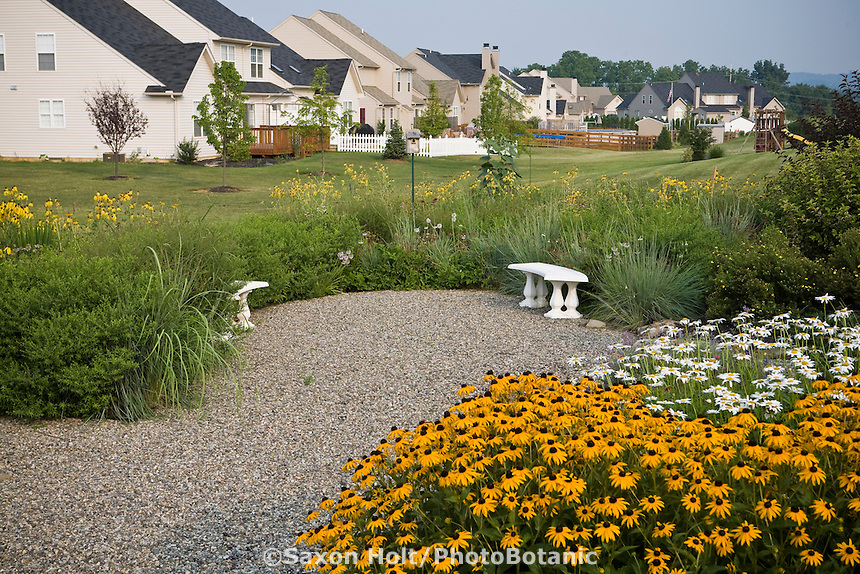 Holt932212g photobotanic stock photography garden library small backyard meadow garden with gravel patio lawn substitute in community landscape housing development workwithnaturefo