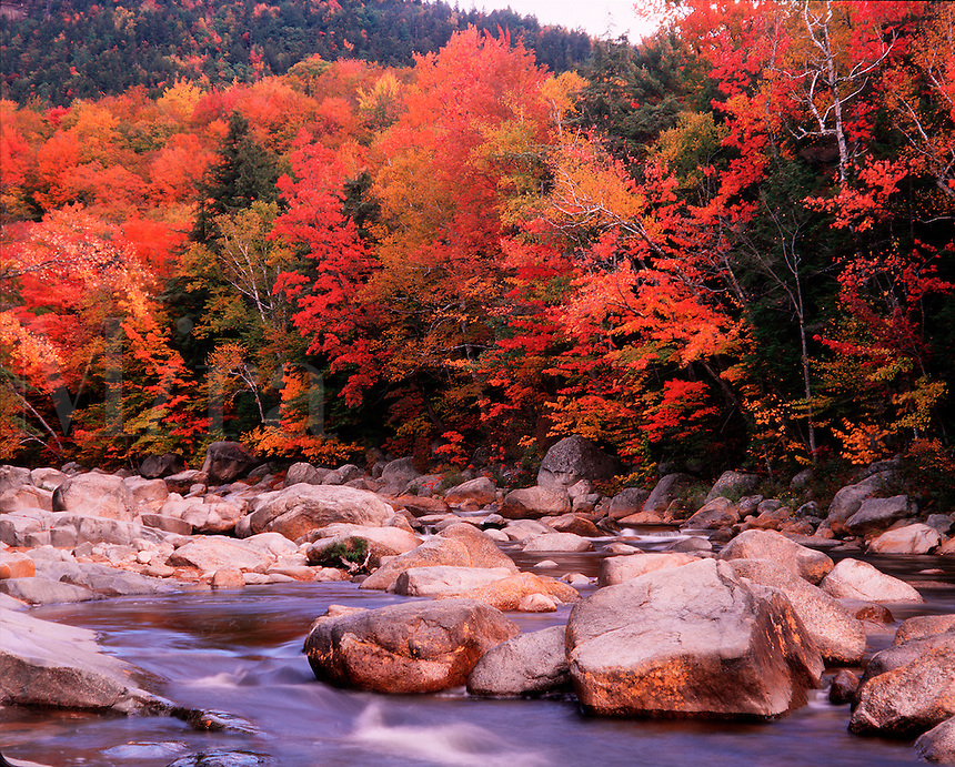 Fall color along the Swift River in the White Mountain National Forest.