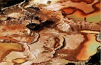 """Iranduba Amazonas 26 11 2007 - Castaneira sobrevive em meio a devastação causada por olarias na comunidade de cacau Pirera em Iranduba. A série """"Uma certa Amazônia"""" realizada durante a primeira década do século  21, quando os eventos extremos de cheia e vazante na Amazônia revelaram que algo de muito errado está acontecendo com o clima do planeta. Mudanças cada vez mais drásticas no regime das águas da bacia dos rios Negro e Solimões provocaram impactos como a fome, sede, doenças e mortandade de animais. O cotidiano das populações tradicionais e a paisagem amazônica mudaram definitivamente. Uma situação de extremos, onde as vazantes estão, a cada ano, se transformando em catástrofes e as cheias mostrando-se cada vez mais trágicas. Este cenário que a cada vez mais perde áreas de florestas para o agronégocio, principalmente  as plantações de soja e milho, assim como a criação de gado, além da pressão sofrida pela industria madereira em áreas de preservação permanente e também em terras indígenas, além  da exploração mineral e a ameaça pelas grandes obras de infra-estrutura do governo brasileiro fazem da Amazônia um dos ecossistemas mais frágeis perante a ação do homem."""