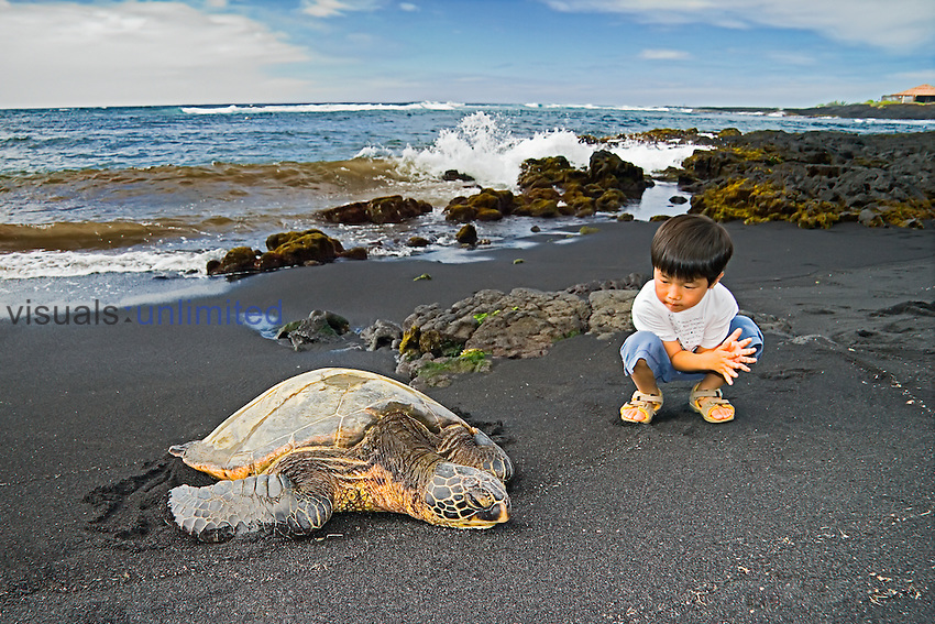 An oriental child observing Green Sea Turtle, Chelonia mydas, Punalu`u Black Sand Beach, Big Island, Hawaii, Pacific Ocean.