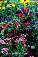 63821-084.15 Pink Pentas, Sun Coleus, Blue Victoria Salvia, & Indian Summer Black-eyed Susans   Marion Co.  IL