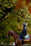 November 1, 2018: Vale Dori (ARG), trained by Bob Baffert, exercises in preparation for the Breeders' Cup Distaff at Churchill Downs on November 1, 2018 in Louisville, Kentucky. Alex Evers/Eclipse Sportswire/CSM