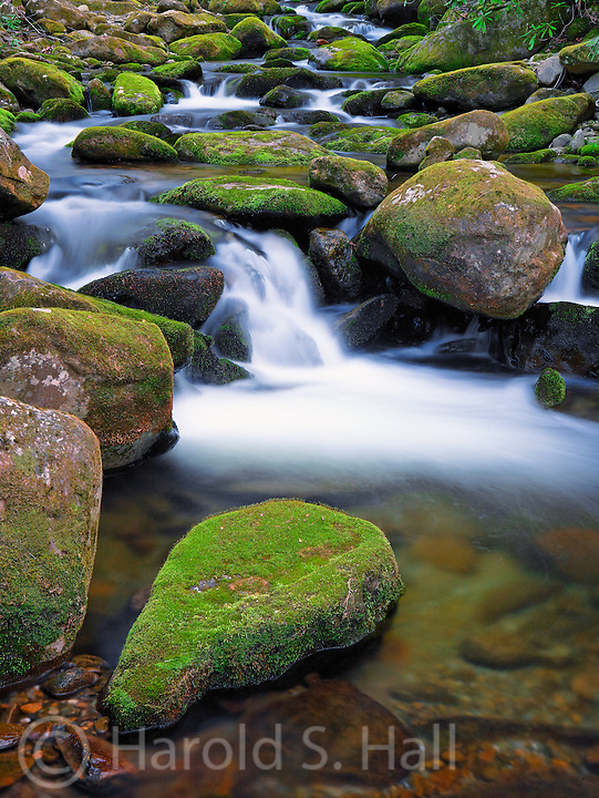 Moss coated rocks fill a stream in the Smoky Mountains National Park in Tennessee.