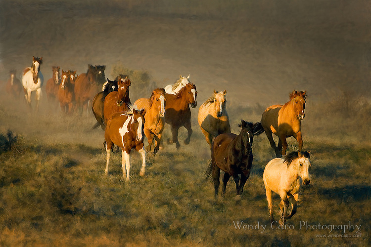 Herd of horses, playfully galloping across a pasture, northwest Colorado