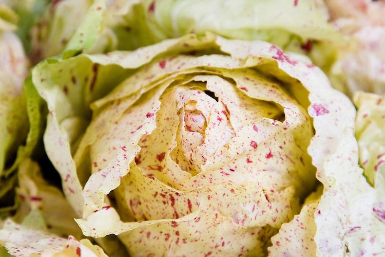Closeup of Castelfranco lettuce