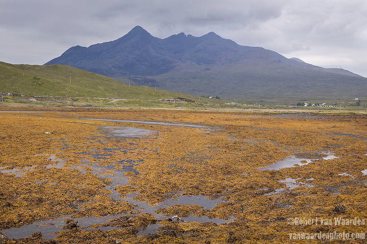 Colourful kelp covers the rocks of an inlet while a mountain rises in the background on the Isle of Skye, Scotland.