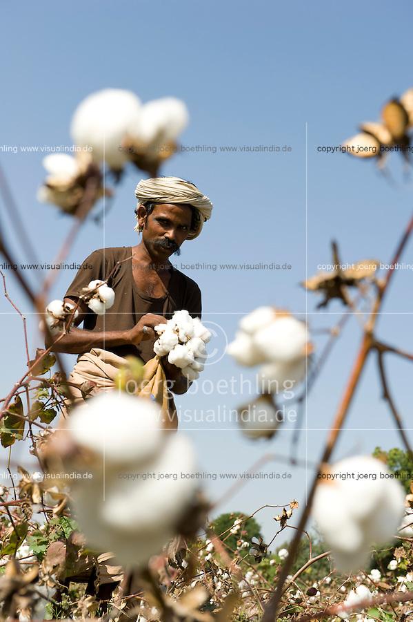 INDIA, Madhya Pradesh, Nimad region, Khargone , tribal farmer of cooperative Shiv Krishi Utthan Sanstha harvest fair trade organic cotton / INDIEN, Madhya Pradesh, Khargone, Adivasi farmer der Kooperative Shiv Krishi Utthan Sanstha ernten fairtrade Biobaumwolle