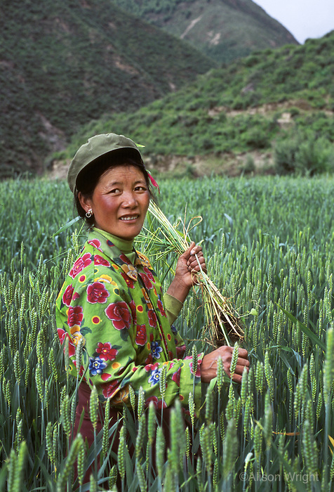 Woman in field, Lunang Valley, Central Tibet, 2004