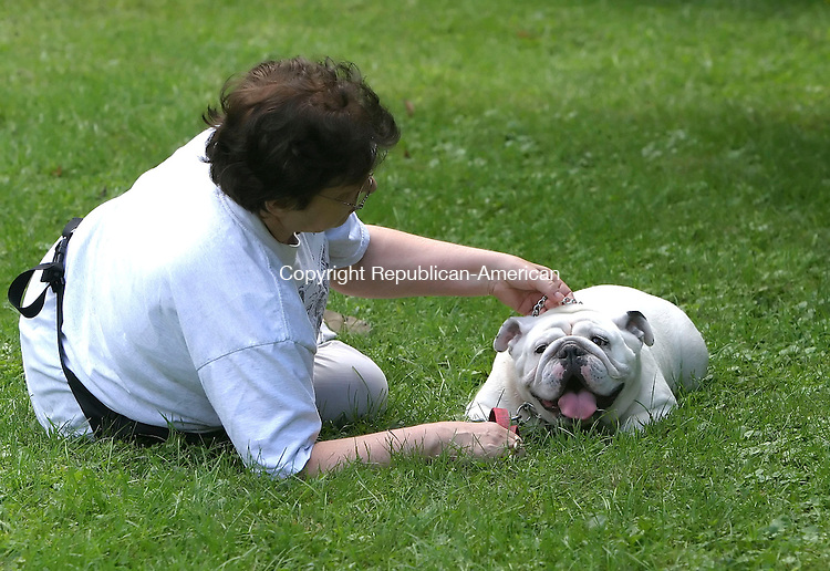 BETHLEHEM, CT, 16 SEPTEMBER 2006, 091606BZ12- Sandy Montouri, of Wolcott, adjusts the collar on her English bulldog &quot;Crystal&quot;<br /> during the fifth annual Bellamy-Ferriday House Dog Show Saturday afternoon.<br />  Jamison C. Bazinet Republican-American