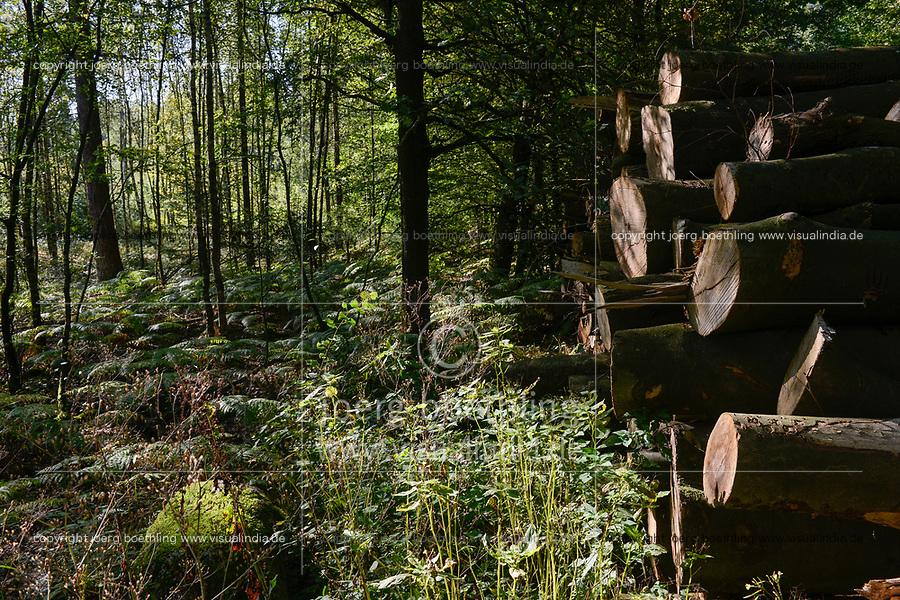 Germany, forest / DEUTSCHLAND, Wald in der Lueneburger Heide