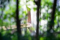 BELO HORIZONTE, MG, 04.07.2019 - CIDADE-MG - Filhote de gorila no Jardim Zoológico de Belo Horizonte, na região da Pampulha, em cidade de Belo Horizonte, nesta quinta-feira, 04(Foto: Doug Patricio/Brazil Photo Press)