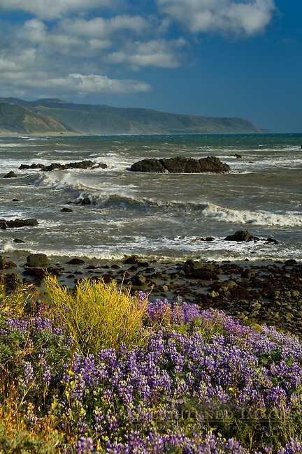 Windswept waves crashing ashore along the Lost Coast near Cape Mendocino, California