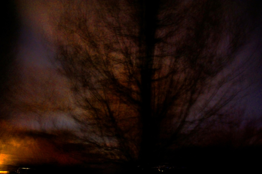 photograph of a tree afer dusk made while walking down a slope and panning so the camera turned to keep the tree centered in the frame.  2014 copyright JimMendenhallPhotos.com 2013.  Pittsburgh, PA.