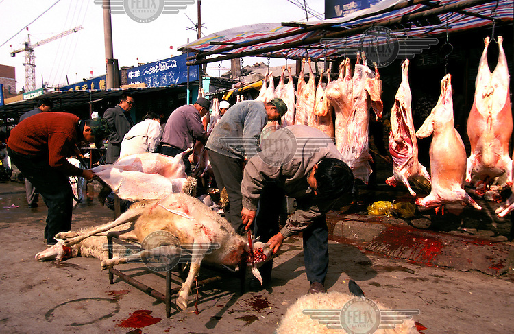 ©Mark Henley/Panos Pictures..China, Shanxi, Datong..Hui Muslim minority butchers' stall, slaughtering sheep by halal method, cutting the throat and then bleeding to death. The animal is then skinned, as at left.
