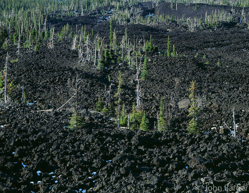 ORCAC_041 - USA, Oregon, Deschutes National Forest, Three Sisters Wilderness, Scattered conifers grow among lava flow south of McKenzie Pass.