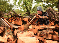 NWA Democrat-Gazette/FLIP PUTTHOFF <br />HOT COMMODITY<br />Tre Bridges (cq) loads firewoood Wednesday Oct. 10 2018 on a trailer in Rogers for delivery to the Garfield area. Bridges said he and co-workers sell wood all year, but sales are brisk during autumn. The crew sold 1,900 ricks of firewood in the last year, Bridges said. They also do tree trimming, landscaping and other work.