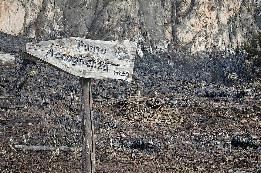 La riserva naturale di Capo Gallo devastata dall'incendio quasi certamente doloso del 16 giugno, <br />