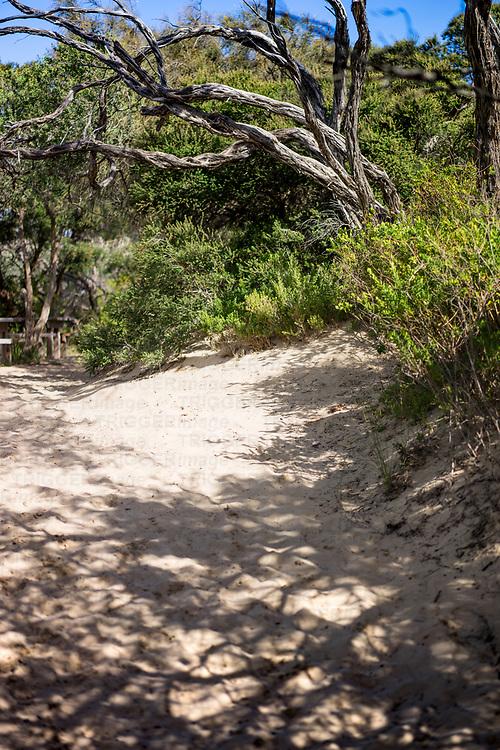 shadows on the sand on a path