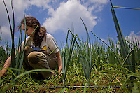 Nicole Sugarman, CSA co-manager of Henry Got Crops!, weeds a row of onions at the farm at W.B. Saul High School in the Roxborough section of Philadelphia. Henry Got Crops was one of the first CSAs (Community Supported Agriculture) in the country run by students.