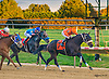 Squared Away in the the final race of the 2015 meet at Delaware Park on 10/17/15<br /> It sure got dark for the last race