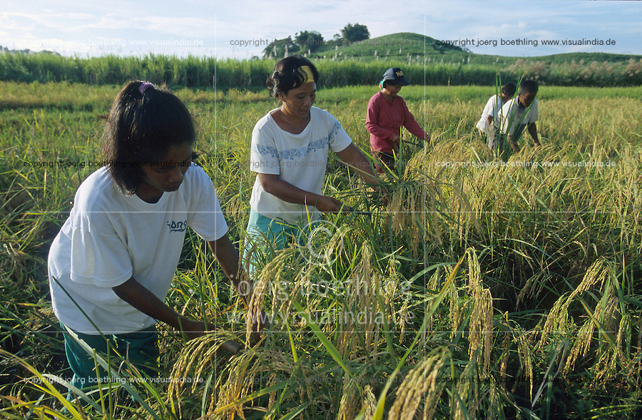 PHILIPPINES, Negros, NGO BIND promotes organic rice farming after SRI method, system of rice intensification, paddy harvest at farm of woman farmer Emilia Dalisay in village Sitio Sutay / PHILIPPINEN Negros, NGO BIND foerdert den oekologischen  Reisanbau nach dem SRI System, System zur Reisintensivierung, <br />