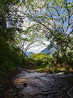 Trees create canopy over a stream in lush, Waipi'o Valley, Big Island.