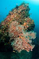 Coral-covered wreck, Liberty Wreck dive site, Tulamben, near Seraya, Bali, Indonesia, Indian Ocean