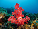 Du Li Jiao (Independence Reef), Green Island -- Soft coral in the underwater landscape.
