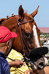 DEL MAR, CA  AUGUST 4:  #4 Tap the Wire, gives a side eye after winning the Graduation Stakes  in the stretch on August 4, 2018 at Del Mar Thoroughbred Club in Del Mar, CA. (Photo by Casey Phillips/Eclipse Sportswire/ Getty Images)