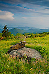 Summer vista along Engine Gap, Roan Highlands, Tennessee and North Carolina