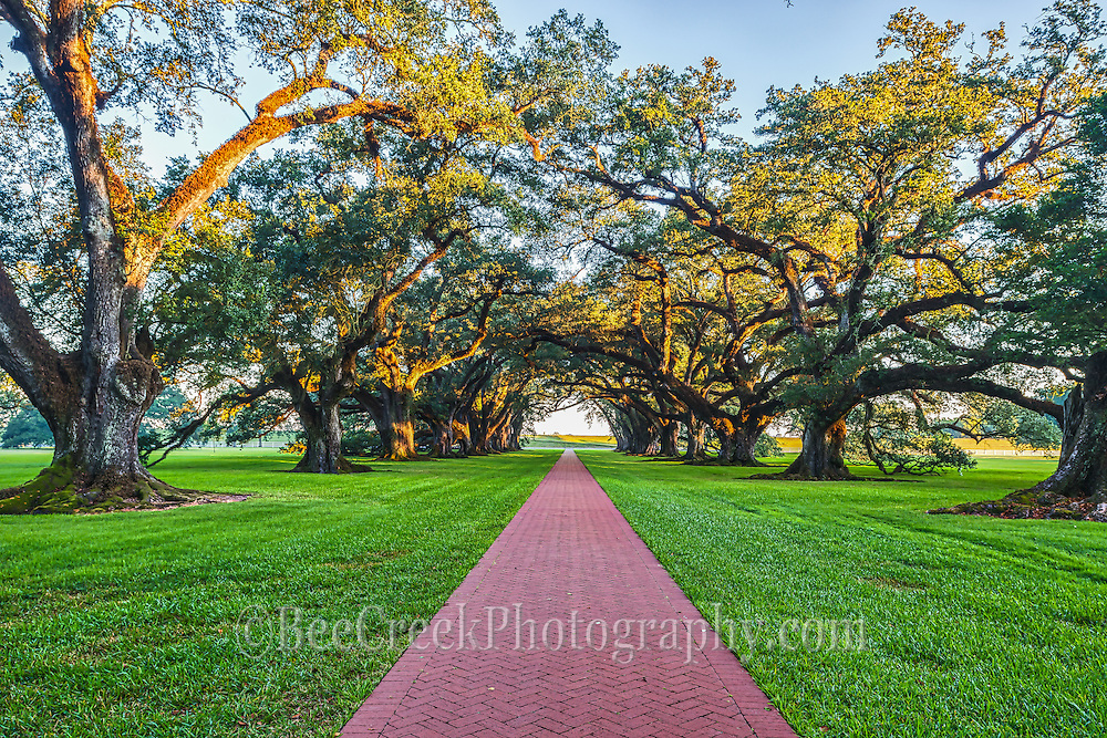 Early morning light kiss through the trees at Oak Alley as the path seems to go on forever toward the Mississippi.