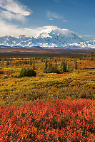 Autumn tundra and Denali, North America's tallest peak at approximately 20,237 ft. (6,168m),  Alaska.