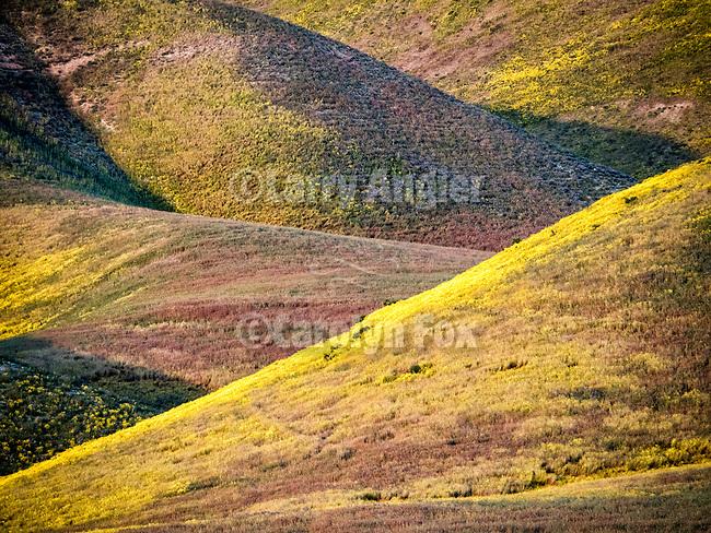Wildflower-covered Temblor Range at sundown, California Valley, Calif.