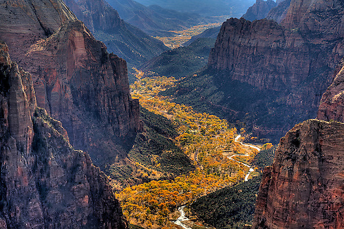 A ribbon of gold threads its way through Zion Canyon during autumn at Zion National Park, Utah