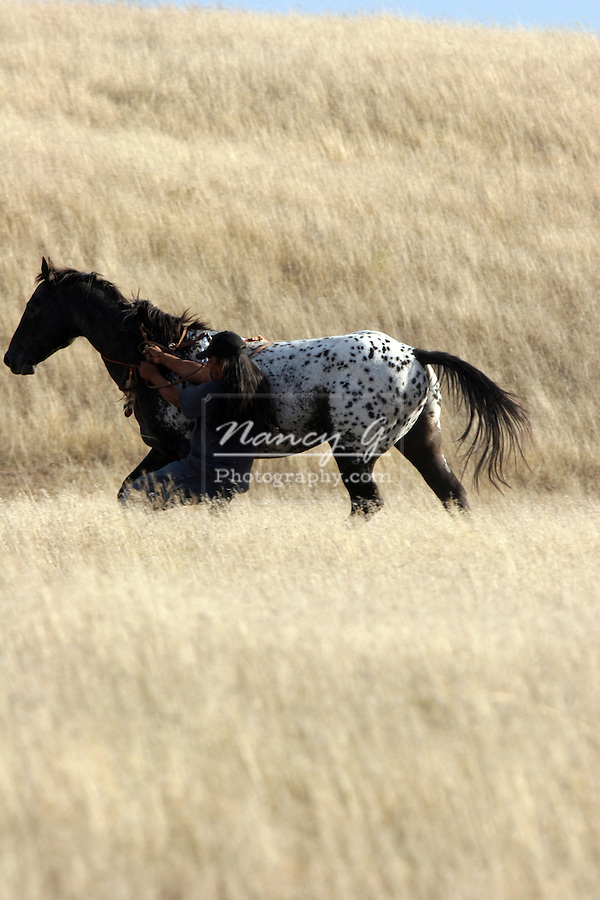 A Native American Indian catching a Indian pony on the prairie of South Dakota