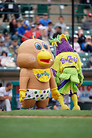 BabyZerk and BirdZerk perform during a Rochester Red Wings International League game against the Charlotte Knights on June 16, 2019 at Frontier Field in Rochester, New York.  Rochester defeated Charlotte 3-2 in the second game of a doubleheader.  (Mike Janes/Four Seam Images)