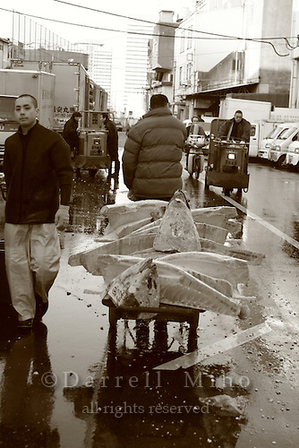 Mar 4, 2006; Tokyo, JPN; Tsukiji.A buyer takes his recently purchased frozen tuna back to his warehouse at the Tsukiji Fish Market...After tuna is caught, it is flash frozen at sea to keep it fresh until it is brought to the market to be sold...Photo credit: Darrell Miho