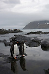 Gentoo penguins and Southern elephant seals in Gold Harbour, South Georgia.