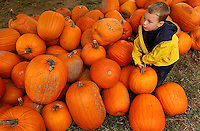 A young boy works to select the perfect Halloween pumpkin during his visit to a pumpkin patch in North Carolina.