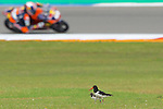 IVECO DAILY TT ASSEN 2014, TT Circuit Assen, Holland.<br /> Moto World Championship<br /> 27/06/2014<br /> Free Practices<br /> <br /> RME/PHOTOCALL3000