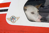Dropped sled dog waits to unload from Russ Dunlaps plane @ Unalakleet 2006 Iditarod Western AK Winter