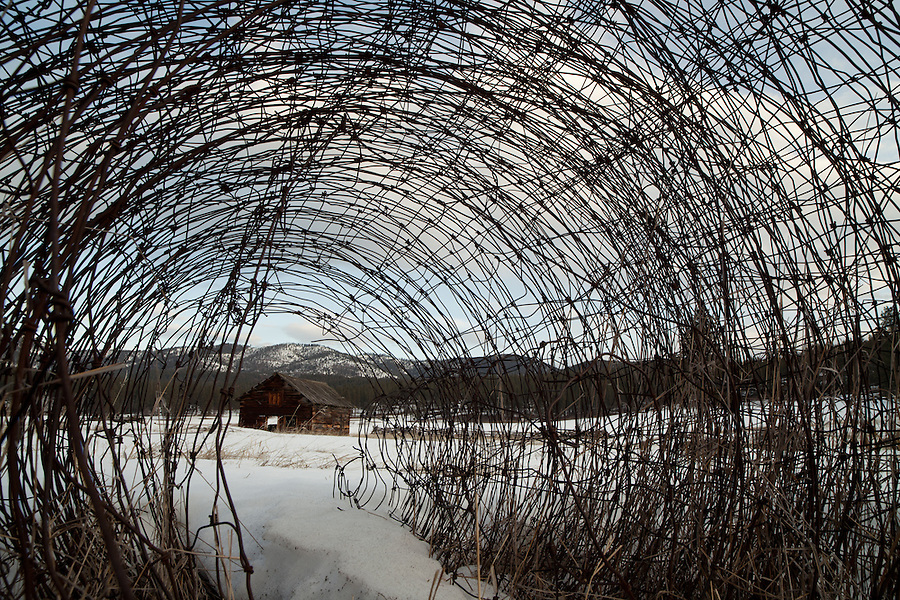 The view of a barn from the perspective of a small creature as it waits inside a roll of rusted wire fence.