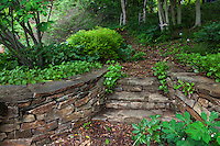 Stone wall and steps entry into woodland hillside path; Taylor garden