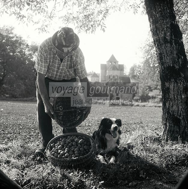 Europe/France/Midi-Pyrénées/46/Lot/Thegra: Mr Jean Chartroux et son chien Justin ramasse ses noix du Quercy [Non destiné à un usage publicitaire - Not intended for an advertising use]<br /> PHOTO D'ARCHIVES // ARCHIVAL IMAGES<br /> FRANCE 1990
