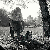 Europe/France/Midi-Pyrénées/46/Lot/Thegra : Mr Jean Chartroux et son chien Justin ramasse ses noix du Quercy [Non destiné à un usage publicitaire - Not intended for an advertising use]<br /> PHOTO D'ARCHIVES // ARCHIVAL IMAGES<br /> FRANCE 1990